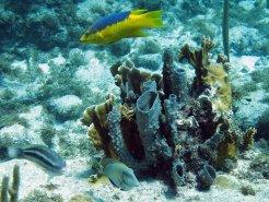 Curacao May 2012 10