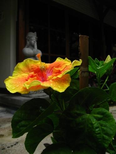 Bali 2006