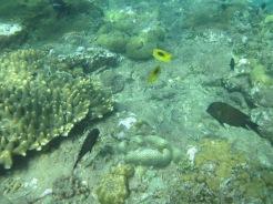 Amed-Bali-15