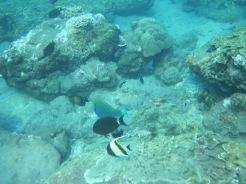 Amed-Bali-16