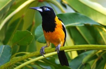 Birds of Curaçao 01