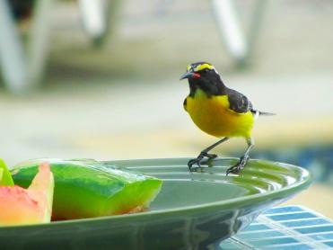 Birds of Curaçao 03