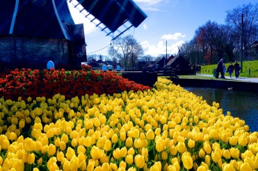 Spring is the perfect time for the quintessentially Dutch tulips.