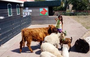 Children farm at the park