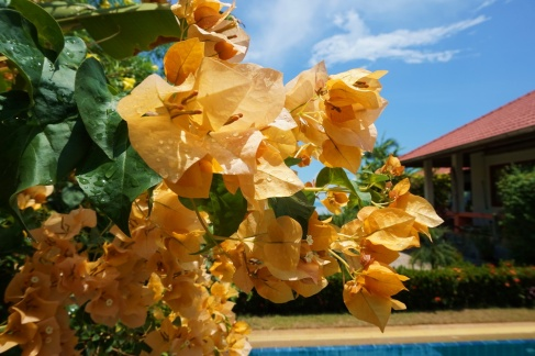 Our lush tropical garden house